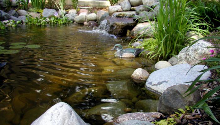 Allestire un laghetto per pesci in giardino in giardino for Cascata per laghetto