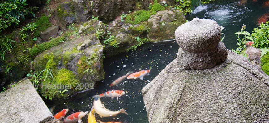 Allestire un laghetto per pesci in giardino in giardino for Pesci per laghetto giardino
