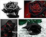 2016 100 semi di rosa rari Black Rose fiore con Red Bordo raro della Rosa Fiori Seeds.For giardino bonsai Piantare ...