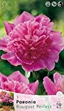 BULBI PRIMAVERILI PAEONIA BOUQUET PERFECT CONFEZIONE DA 1 RADICE BULBS PEONIA
