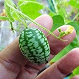 CUCAMELON 10 Semi Cetriolino Mini Messicano Insalate Aperitivo Melothria Scabra