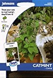 johnsons seeds - Pictorial Pack - Fiore - Erba Gatto - Erba Gatto - 250 Semi