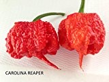SEMI PEPERONCINO-CAROLINA REAPER HP22B + CAROLINA YELLOW-