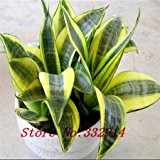 Vendita Vendita calda! 100pcs / bag semi rari cinesi Sansevieria 20 varietà Bonsai Semi Garden Novel piante Anti-Radiation